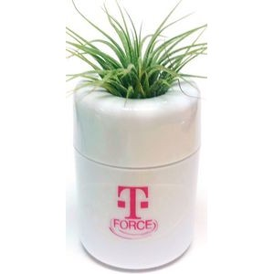 Air Plant in White Pot